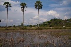 Cambodia, Kampot-3413 2
