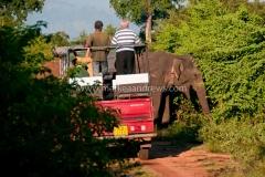 Sri Lanka-5569