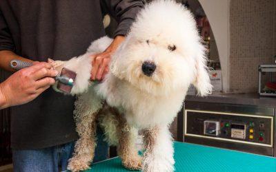That's Shanghai. Haute Dogs. Shanghai's dog care industry.